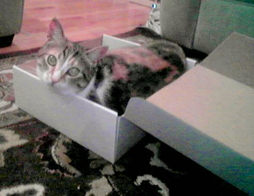 Emmy in a box