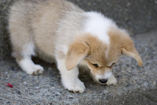 Firefox puppy!