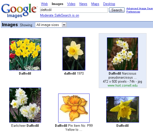 Daffodil search