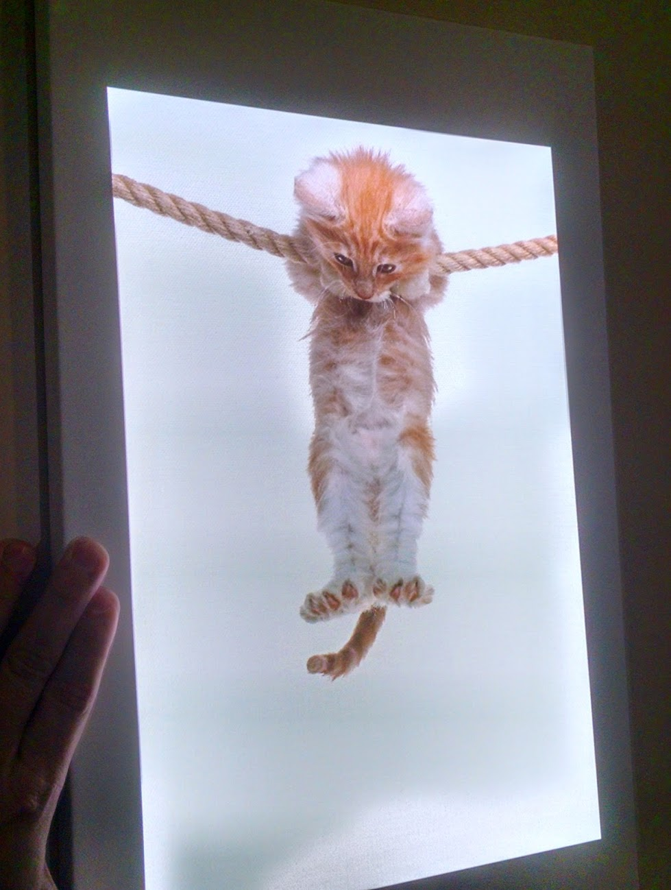Kitten Poster: Hang in There, Baby!