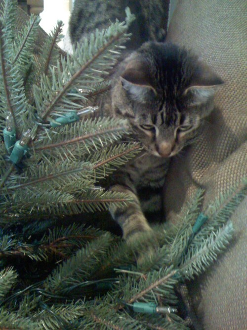 Ozzie finds a Christmas tree!