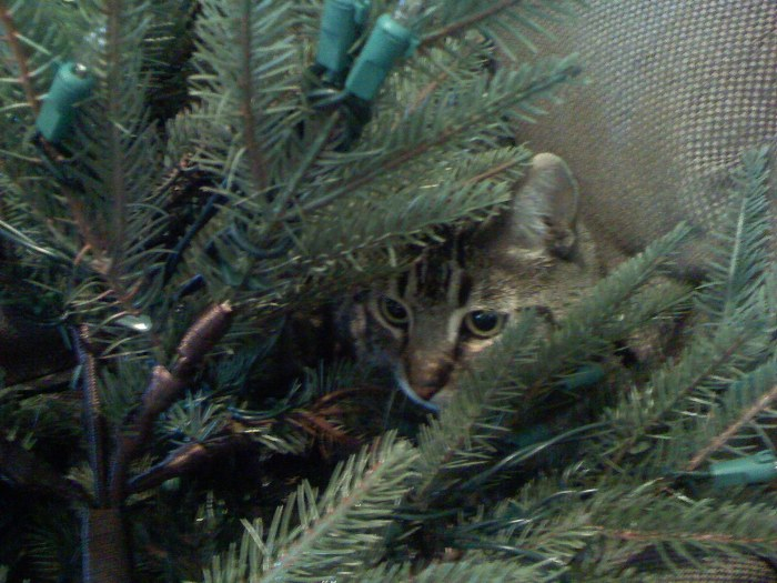 Ozzie hides in a Christmas tree!