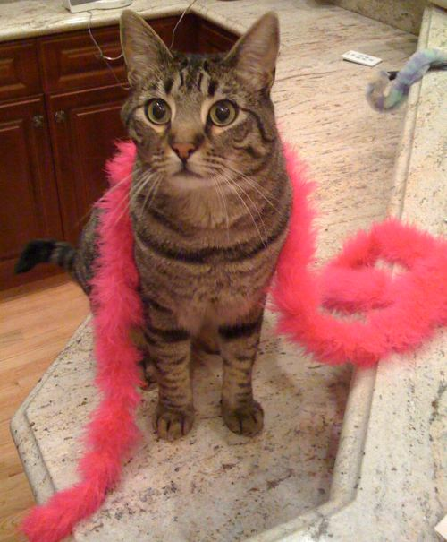 Ozzie with a boa feather
